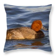 Male Redhead Duck Throw Pillow
