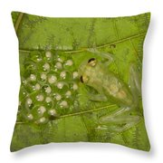 Male Reticulated Glass Frog  Guarding Throw Pillow