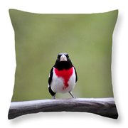 Male Rose-breasted Grosbeak Throw Pillow