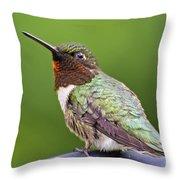 Male Ruby Throated Hummingbird Throw Pillow