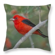 Male Scarlet Tanager Throw Pillow