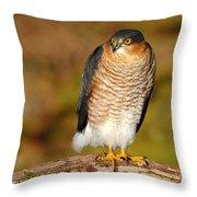 Male Sparrowhawk Throw Pillow