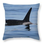 Male Transient Orca In Monterey Bay 11-10-13 Throw Pillow