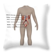 Male Urinary System Throw Pillow
