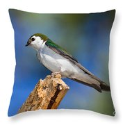Male Violet-green Swallow Throw Pillow