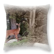 Male Whitetail Deer Throw Pillow
