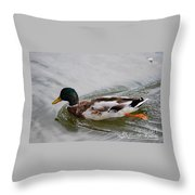 Mallard 20130924_302 Throw Pillow