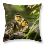 Mallard Babies Throw Pillow