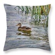 Mallard By The Reeds Throw Pillow