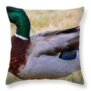 Mallard Colors Throw Pillow
