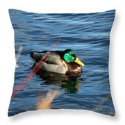 Mallard Drake Passing  Throw Pillow