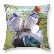 Mallard Drake Stretch  Throw Pillow
