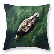 Mallard Duck On Green Pool Throw Pillow