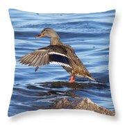 Mallard Duck Showing Off Throw Pillow