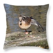 Mallard Duck Stretch  Throw Pillow