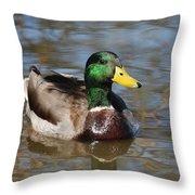 Mallard Duck Watches Throw Pillow