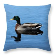 Mallard Duck With Reflection On The Water Throw Pillow