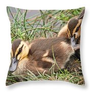 Mallard Ducklings And Mom Throw Pillow