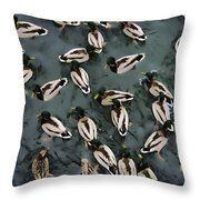 Mallard Ducks On A Pond Throw Pillow