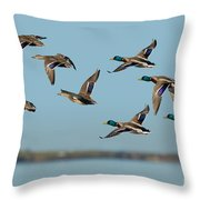 Mallard Flock Flying Throw Pillow