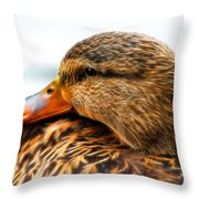 Mallard Hen Close Up Throw Pillow