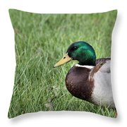 Mallard In The Grass Throw Pillow