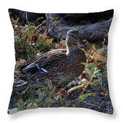 Mallard In The Grass Throw Pillow