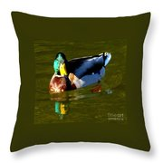 Mallard Male Duck Throw Pillow