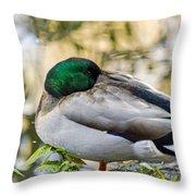 Mallard Napping Throw Pillow