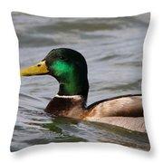 Mallard On The Lake Throw Pillow