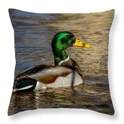 Mallard Square Format Throw Pillow
