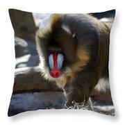 Mandrill Monkey Throw Pillow