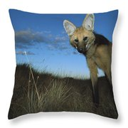 Maned Wolf Hunting At Dusk Brazil Throw Pillow