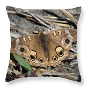 Mangrove Buckeye  Throw Pillow