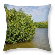 Mangrove Fores Throw Pillow by Carol Ailles