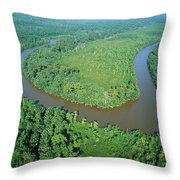 Mangrove Forest In Mahakam Delta Throw Pillow