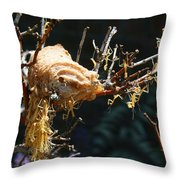 Mantids Hatch Throw Pillow