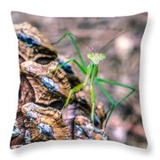 Mantis On A Pine Cone Throw Pillow