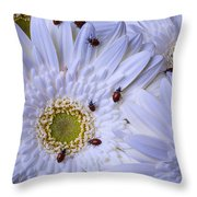Many Ladybugs On White Daisy Throw Pillow by Garry Gay