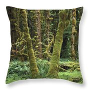 Maple Glade Quinault Rain Forest Throw Pillow