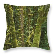 Maple Glade Quinault Rainforest Throw Pillow