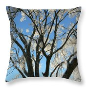 Maple Glazed  Throw Pillow