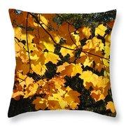 Maple Gold Throw Pillow