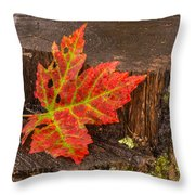 Maple Leaf On Oak Stump Throw Pillow