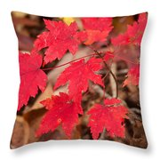 Maple Leaf Palette Throw Pillow