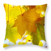 Maple Leaves In Autumn Glory Throw Pillow