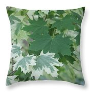 Maple Leaves Same Tree Throw Pillow