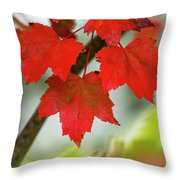 Maple Leaves Show Off Their Autumn Hues Throw Pillow