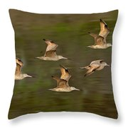 Marbled Godwit Flock Flying Throw Pillow