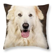 Maremma Sheepdog Throw Pillow